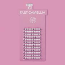 FAST CAMELLIA / D CURL